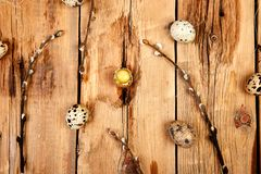 Quail eggs in the nest on wooden background with willow branch stock images