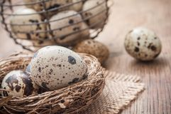 Quail eggs in nest on wooden table with metallic bask. Closeup of quail eggs in nest on wooden table with metallic basket background Stock Photography