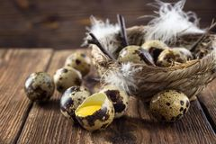 Quail eggs and nest stock photos