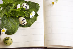Quail eggs on a notebook with daisies Stock Photo