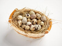 Quail eggs nutrition Stock Image