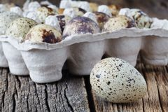 Quail eggs on old brown wooden surface Royalty Free Stock Image