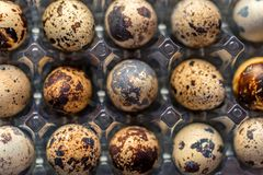 Quail eggs on old brown wooden surface. Of rustic background, selective focus Royalty Free Stock Image