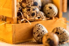 Quail eggs on old brown wooden surface. Of rustic background, selective focus Royalty Free Stock Photos