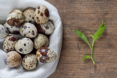 Quail eggs on an old wooden table with green spring leaves Stock Photography