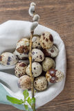 Quail eggs on an old wooden table with green spring leaves Royalty Free Stock Photos