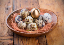 Quail Eggs with one gold Stock Images