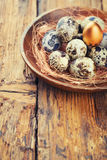 Quail Eggs with one gold Stock Image