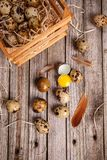 Fresh quail egg. Quail eggs over aged wooden background Royalty Free Stock Images