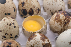 Quail eggs pack Royalty Free Stock Image