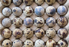 Quail eggs in package Royalty Free Stock Photography