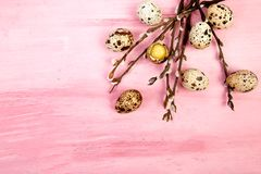 Quail eggs on pink background with willow branch. Happy easter. Top view. Free space. Flat lay. Spring. Easter egg royalty free stock photos