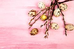 Quail eggs on pink background with willow branch. Happy easter. Top view. Free space. Flat lay. Spring. Easter egg royalty free stock photo