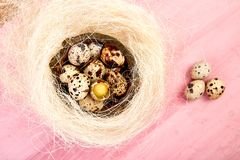 Quail eggs on pink background with willow branch. Quail eggs  in the nest on pink background with willow branch. Happy easter. Top view. Free space. Flat lay royalty free stock image