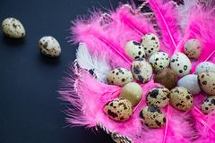 Quail eggs in pink feathers. stock photos