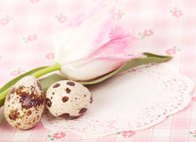 Quail eggs with pink tulip Stock Photos