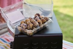 Quail eggs in plastic box on oven top. Quail or bird eggs in plastic box on oven top Stock Photos