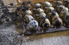 Quail eggs in plastic container Stock Images