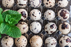 Quail eggs in plastic container Royalty Free Stock Photos