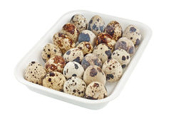 Quail eggs in a plastic container closeup Stock Image