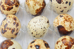 Quail eggs in plastic container Royalty Free Stock Photo