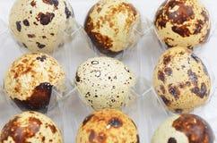 Quail eggs in plastic container Stock Photos