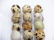 Quail eggs in plastic holder
