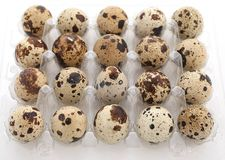Quail eggs in a plastic tray on a white background Stock Photo