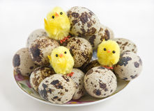 Quail eggs on a plate Royalty Free Stock Photography