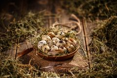 Quail eggs in plate. On wooden background Royalty Free Stock Image
