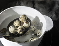 Quail eggs. In the pot Stock Photo