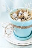 Quail Eggs in the Pot of Turquoise Colour with cord Stock Image
