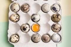 Quail eggs in random order with yolk in cardboard packaging..Vegetarian eco organic food. Quail eggs in random order with yolk in cardboard packaging. Vegetarian royalty free stock image