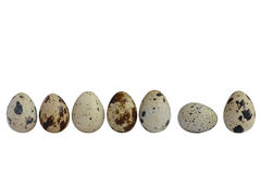 Quail eggs in a row. Few quail eggs isolated on white background Royalty Free Stock Image