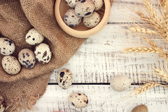 Quail eggs on rustic wooden background. Top view Royalty Free Stock Images