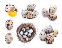 Quail eggs set: single, group, nest, broken Stock Photography