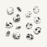 Quail eggs with and without shadows Royalty Free Stock Photography