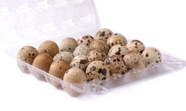 Quail eggs in the shell Stock Images