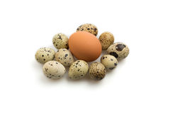Quail eggs with single chicken egg Royalty Free Stock Photography