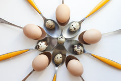 Quail eggs on spoons Royalty Free Stock Photography