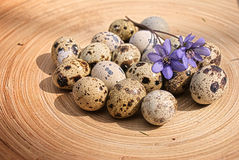 Quail eggs with spring flover. Quail eggs on the tray Royalty Free Stock Photo
