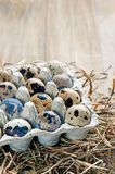 Quail eggs on a straw background Stock Photos