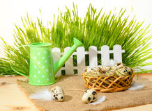 Quail eggs with straw and feathers in basket, fence, watering ca Royalty Free Stock Photography