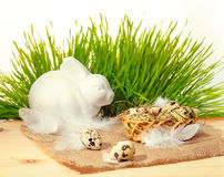Quail eggs with straw and feathers in basket, white bunny on bur Stock Images