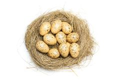 Quail eggs on straw nest royalty free stock image