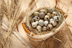 Quail eggs. Studio shot of quail eggs in a wicker basket Stock Image