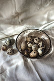 Quail eggs on tablecloth, gray background Royalty Free Stock Photos