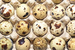 Quail eggs in tapes. Royalty Free Stock Photos
