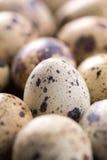 Quail eggs texture. Many quail eggs Stock Image