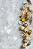 Quail eggs top view. Quail eggs on a grey background top view Royalty Free Stock Images
